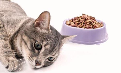 Pérdida de apetito por fiebre felina