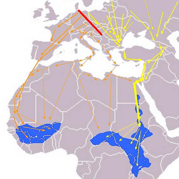 rutas migratorias de las cigüeñas negras