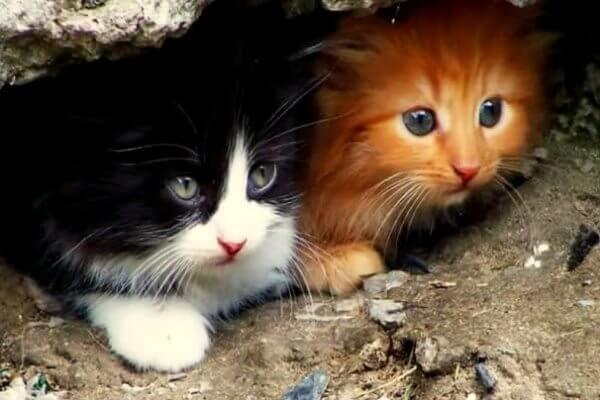 como saber la edad de un gato callejero