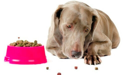 motivos mi perro no come