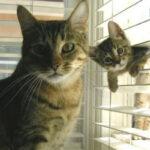 cómo saber la edad de un gato