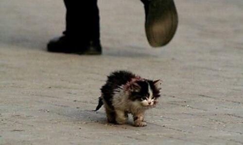 cuanto vive un gato comun