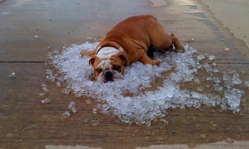mi perro no come cuando hace calor