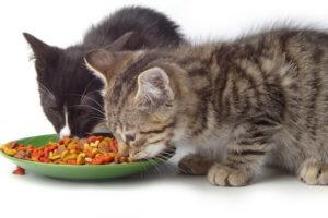 Cómo alimentar a mi gato