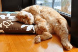 por que mi gato pasa el dia durmiendo