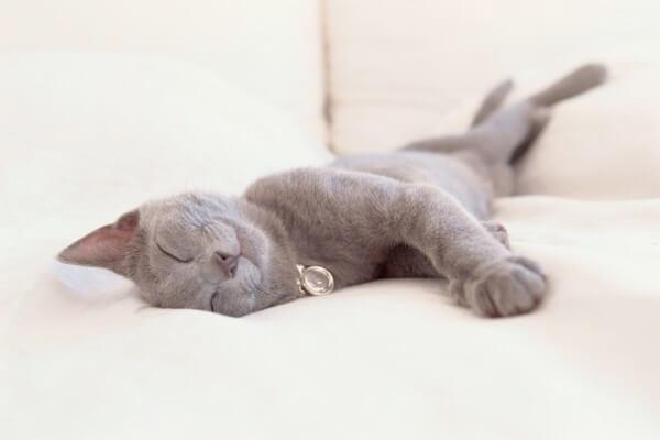 cuanto pueden dormir los gatos