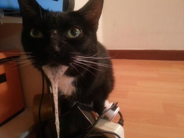 cómo prevenir la rabia en un gato