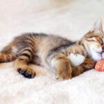 cuantas horas duerme un gato