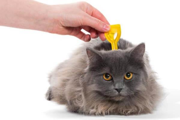 pipetas para desparasitar gatos