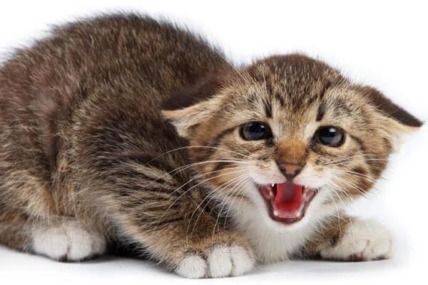 gatos muerden cola causas
