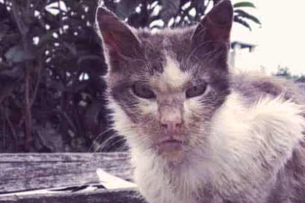 cómo se contagia la rabia de los gatos