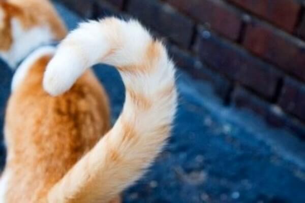 Qué hacer para que mi gato no se muerda la cola