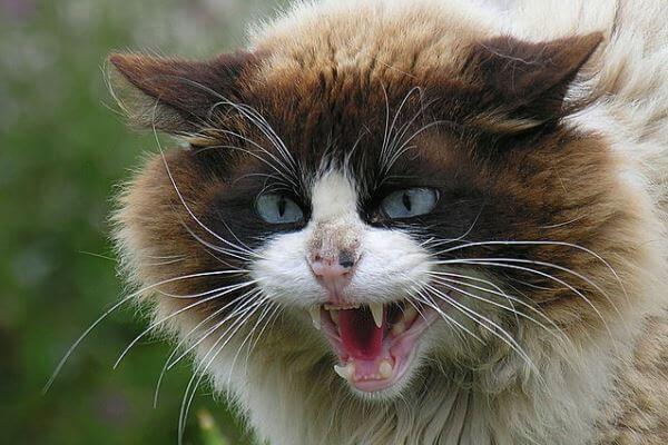 Saber si mi gato tiene rabia