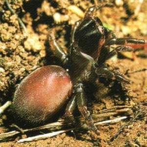 Araña de tela en saco