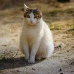 Cómo cuidar a una gata embarazada