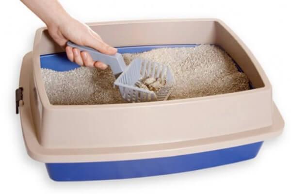 Cómo entrenar a un gato para que use la caja de arena