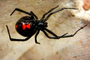 Características de la araña
