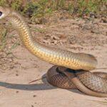 Características de las serpientes
