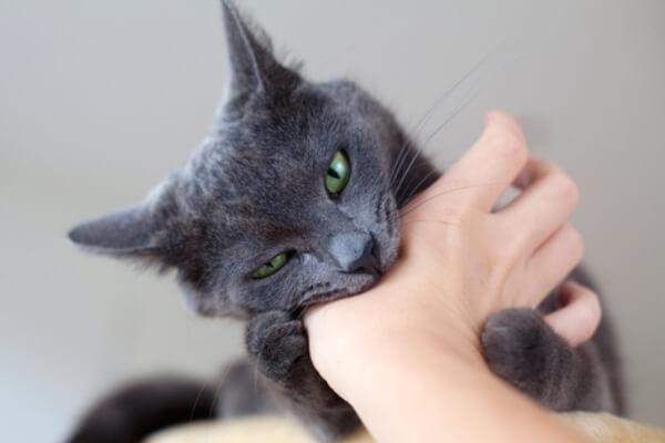 Cómo enseñar a un gato a no morder