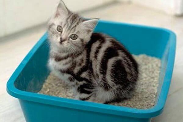Cuando el gato no usa la caja de arena