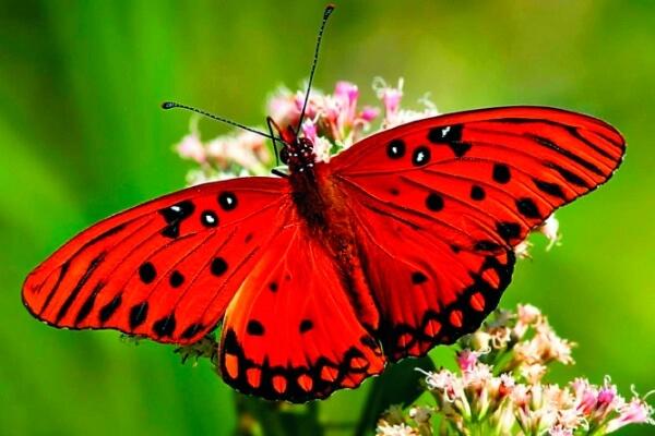 en qué lugar viven las mariposas
