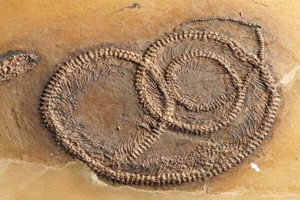 Historia de la serpiente