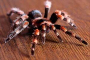 cómo es el cuerpo de una araña