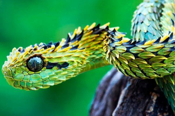 cómo son las serpientes - Las escamas de las serpientes pueden ser de muchos colores