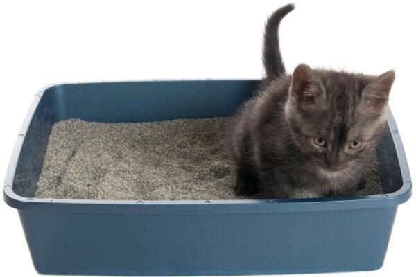como hacer que mi gato use su caja de arena