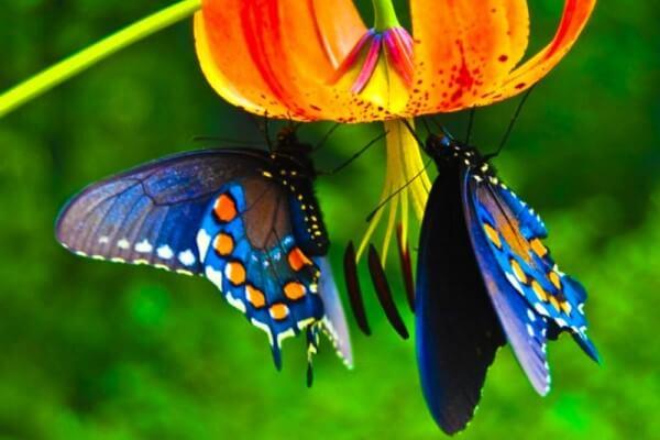 sistema respiratorio mariposas