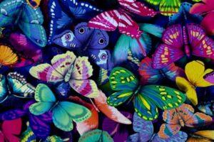 hábitat de las mariposas