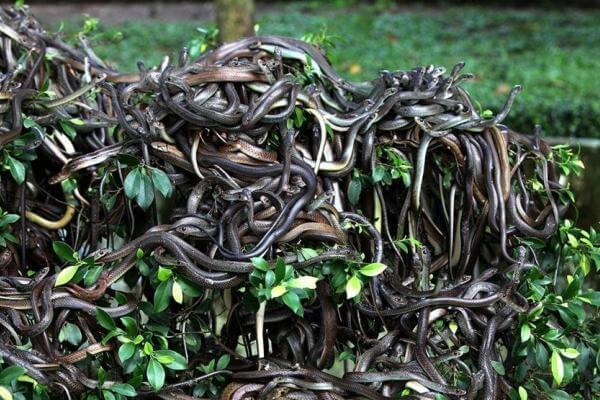 Hábitat de las serpientes - Las serpientes prefieren los climas cálidos