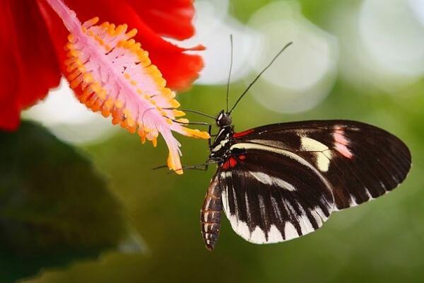 mariposas y su alimentación