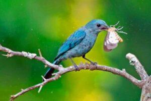 animales que se alimentan de mariposas