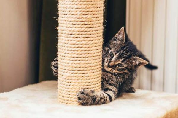 Cómo enseñar a mi gato a usar el rascador