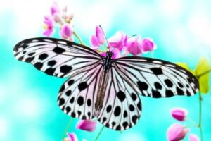 mariposas raras