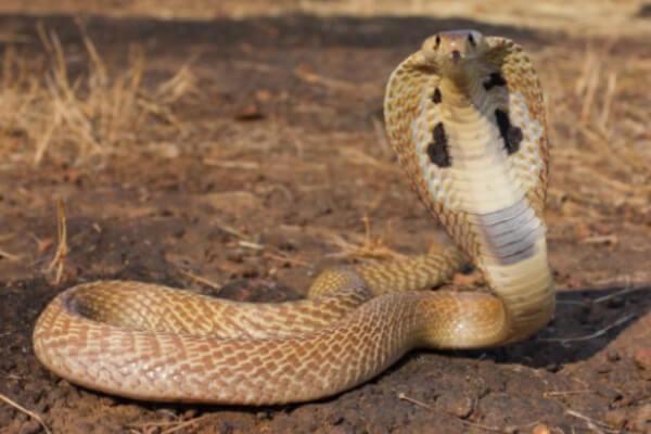 anatomía serpientes