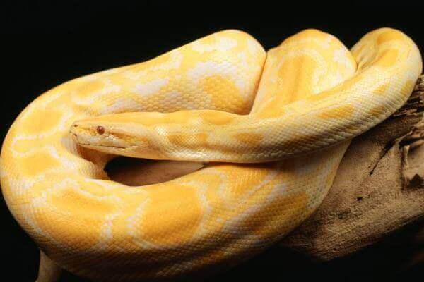 clases de serpientes