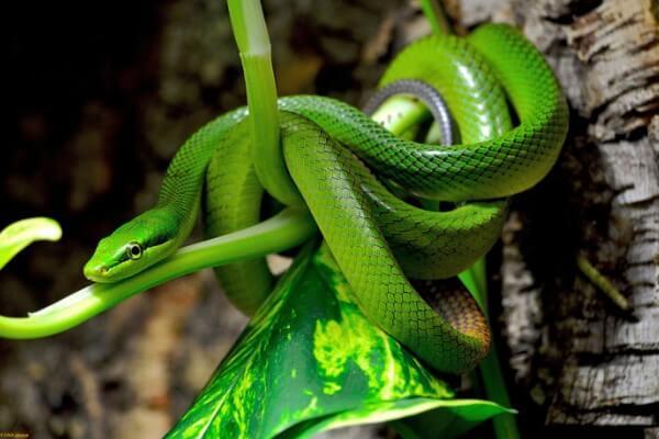 cuántas especies de serpiente existen