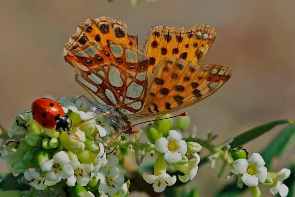 dónde vive mariposa sofía
