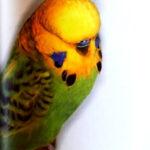 descripción Opalino canela verde claro