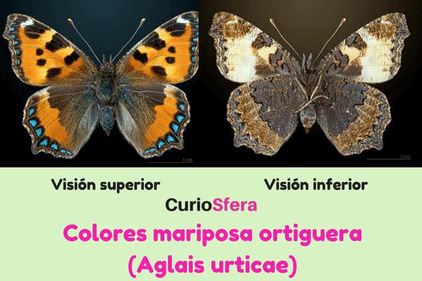 descripción mariposa ortiguera