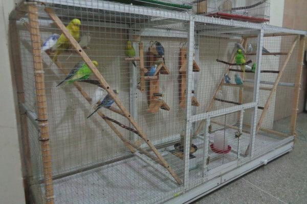 cómo construir jaula apara periquito