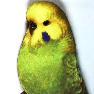 descripción Opalino de alas claras