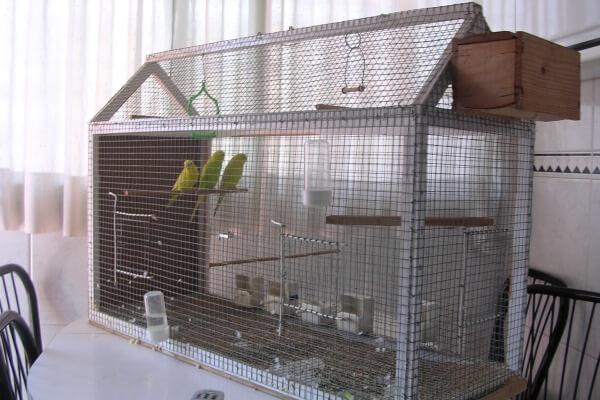 dónde ubicar la jaula del periquito