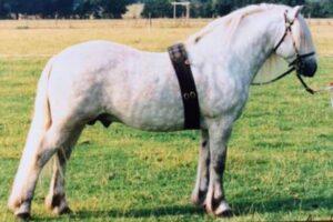 raza de caballo Highland