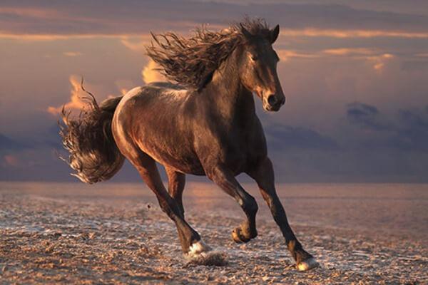 raza de caballo mustang