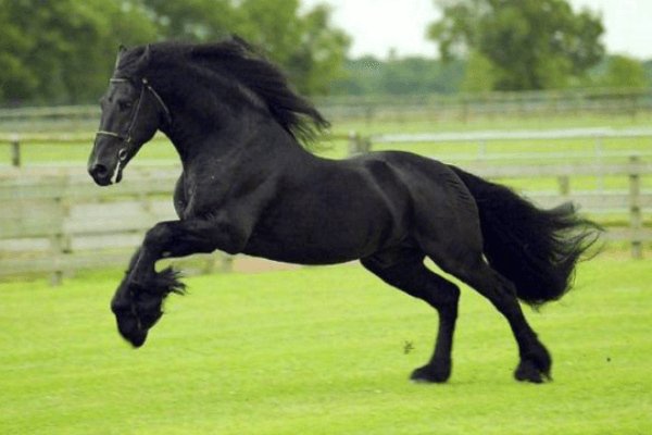 características raza de caballo andaluz