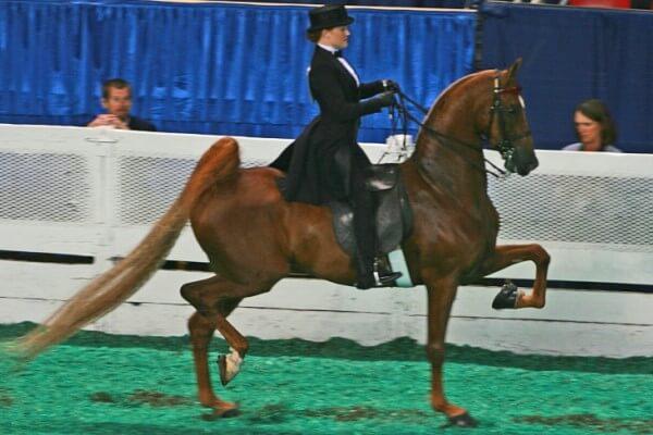 razas de caballo de paso