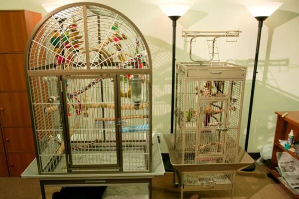 quiero comprar una jaula para mi cacatúa